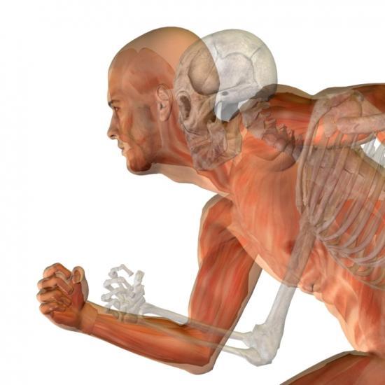 Knochen und Muskeln mit Proteinen unterstützen (Quelle: Shutterstock/design36)