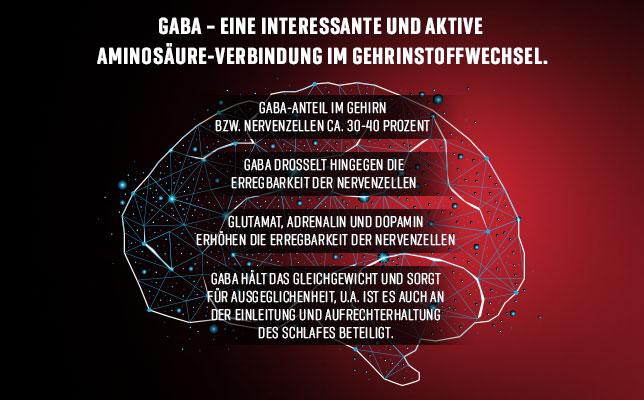 GABA im Gehirnstoffwechsel