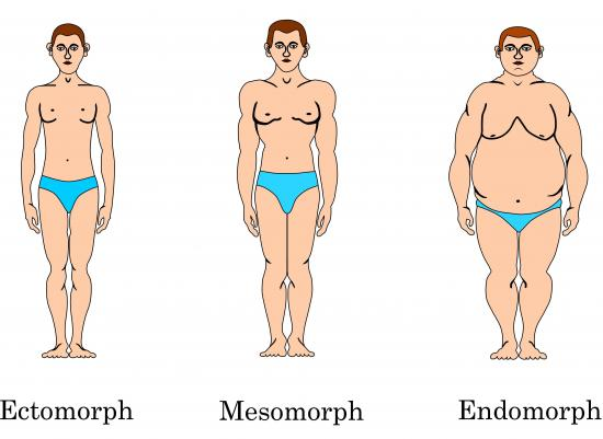 Klassifizierung der Körpertypen (Quelle: Shutterstock/NorSob)