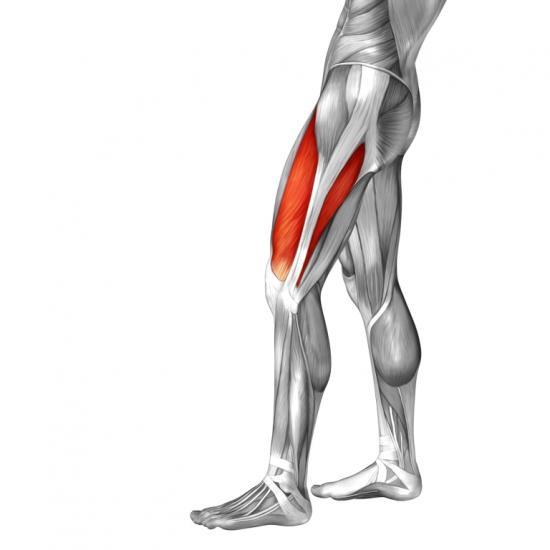 Oberschenkelmuskeln